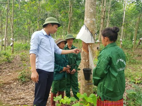 Anh Lý Văn Quý - Phó Phòng Kế hoạch Nông nghiệp, Công ty CPCS Lai Châu 2 kiểm tra kỹ thuật trên vườn cây.