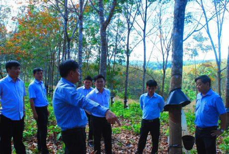 Ban lãnh đạo công ty Chư Mom Ray đi thực tế tại các nông trường để chỉ đạo và kiểm tra công tác đảm bảo PCCC trên vườn cây mùa khô.