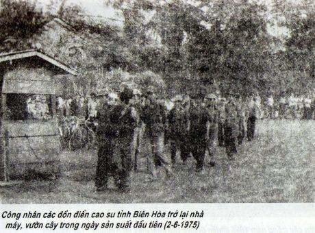 Công nhân các đồn điền cao su tỉnh Biên Hòa trở lại nhà máy, vườn cây trong ngày sản xuất đầu tiên (2-6-1975)