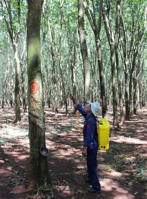 Phun thuốc bảo vệ vườn cây