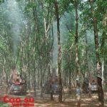 Hơn 70 cán bộ kỹ thuật được tập huấn về công tác bảo vệ thực vật cây cao su