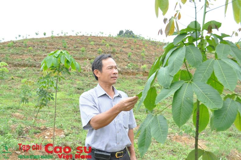 TGĐ VRG  thăm vườn CS Quảng Nam