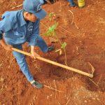 Chỉ trồng khi có cây giống đạt tiêu chuẩn chất lượng