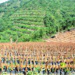 Đồng ý thí điểm cho hộ nông dân góp vốn bằng quyền sử dụng đất để trồng cao su