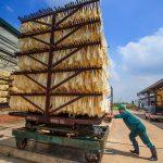 Quy trình chế biến mủ tờ ở Cao su Lộc Ninh