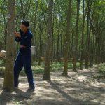 Tập trung rà soát dự án, củng cố vườn cây