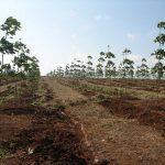 Đăk Lăk đề nghị hỗ trợ nông dân vay vốn trồng cao su
