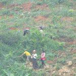 Sự thật về việc Trồng cao su lấn chiếm đất tại Quế Phong (Nghệ An)