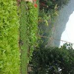 Lợi ích thiết thực từ vườn rau thanh niên