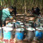 Cao su Việt Nam đầu tư mạnh vào Lào và Campuchia