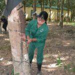 Tăng năng suất vườn cây để bù giá bán thấp