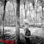 Nhịp sống rừng su