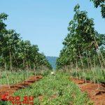 Trồng mới hơn 2.000 ha cao su ở Kon Tum