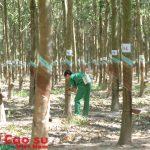 Hội thi Thợ giỏi toàn ngành: Thi thực hành 80 cây