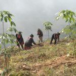 Nâng cao chất lượng vườn cây cao su phía Bắc