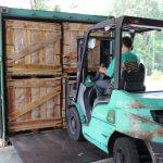 Công ty Dầu Tiếng xuất khẩu gần 25.350 tấn mủ