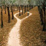 Con đường Tháng Giêng