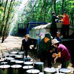 Giao kế hoạch khai thác 250.000 tấn mủ cao su