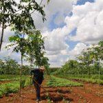 Đa dạng hóa cây trồng để nâng cao giá trị sử dụng đất