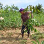 Thấy gì sau 3 năm phát triển cao su tiểu điền ở Kon Tum?