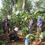 Trồng xen canh cây gì để tăng hiệu quả sử dụng đất?