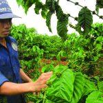 Ổn định tư tưởng người lao động trước mùa cạo mới
