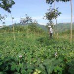 Khảo sát trồng cây dược liệu