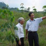 Cao su Nam Giang - Quảng Nam: Khai thác 2.550 ha cao su trong 5 năm tới