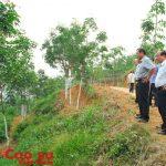 Thanh lý đúng quy trình 70 ha cao su tại Sơn La