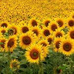 Sự tuyệt vọng cũng đẹp như một bông hoa