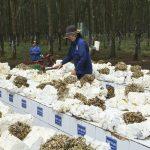 VRG nâng cao hiệu quả hoạt động công ty nông nghiệp