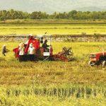 Khơi thông tín dụng phát triển nông nghiệp, nông thôn
