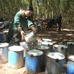 Đảng bộ Cao su Việt - Lào: Vượt khó, tạo niềm tin với người lao động