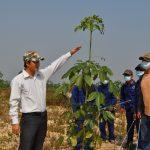 Chư Sê Kampong Thom: Nỗ lực vượt bật trong công tác trồng mới