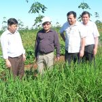Sẽ hỗ trợ các đơn vị miền Trung trồng xen canh