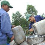 Các đơn vị miền Trung: Sản lượng vượt, trồng mới, tái canh chậm