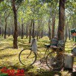 Thợ cạo vùng xa