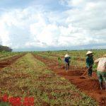 Các CTCS cần được tham gia việc quy hoạch đất đai tại địa phương