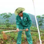 Lãnh đạo tỉnh Lai Châu, Hà Giang và Yên Bái cam kết tiếp tục tạo điều kiện phát triển cao su