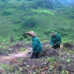 Điện Biên: Cao su giúp nâng cao đời sống người dân
