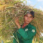 10 ha đất trồng lúa thực hiện công trình thanh niên