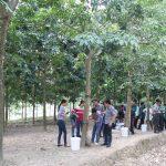 Cao su Sơn La: Tập huấn kỹ thuật trồng xen cây ngắn ngày