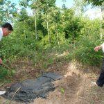 Dùng màng phủ nông nghiệp diệt le: Sáng kiến nhỏ làm lợi tiền tỷ
