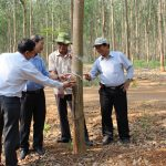 Tiếp tục duy trì và nâng cao năng suất, chất lượng vườn cây