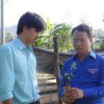 Xen cây dược liệu trên đất cao su: Cách làm hiệu quả