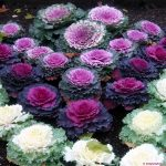 Tự trồng hoa cảnh đón Tết