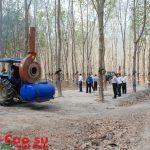 Cao su Kon Tum: Tiết giảm chi phí nông nghiệp nhưng vẫn đạt hiệu quả cao