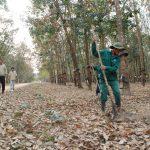 Cao su Kon Tum: Điểm sáng về công tác nông nghiệp ở Tây Nguyên
