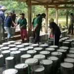 Cao su Quảng Trị: Đẩy nhanh tiến độ tái cơ cấu vườn cây