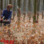Phát động chiến dịch chống cháy vườn cây